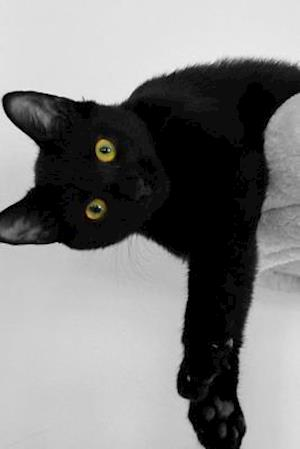 A Black Cat with Green Eyes Sees What You Did Journal af Cs Creations