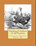 Hamburg Chickens of All Varieties