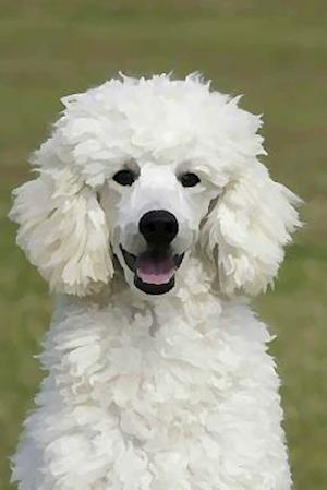 Poodle af Artified Pets