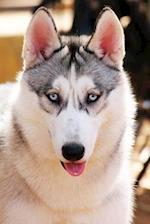 Husky Dog Journal