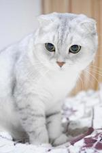 Scottish Fold Cat Animal Journal