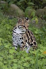 The Margay Journal