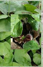 Your Notebook! Wild Ginger