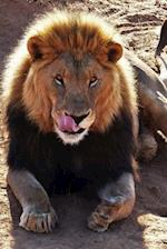 Lion Sticking Out His Tongue Animal Journal