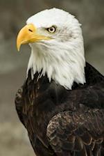 Majestic Eagle Portrait Journal
