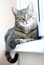 Tabby Cat on a Windowsill Journal