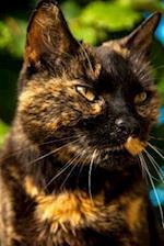 Black and Orange Cat Journal