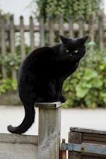 Black Cat Keeping Watch Journal