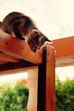 Curious Kitten Journal