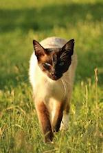 Siamese Cat Stalking You Journal