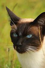 Seal Point Siamese Cat Portrait Journal