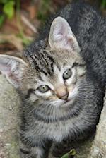 Adorable Kitten Joirnal