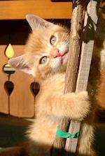 Climbing Orange Tabby Kitten Journal
