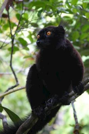 Bog, paperback Black Lemur Journal af Cool Image