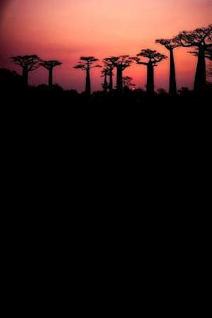 Bog, paperback Field of Baobab Trees in Madagascar Journal af Cool Image