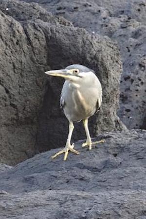Bog, paperback Green-Backed Heron Journal (Butorides Striatus) Bird Journal af Cool Image