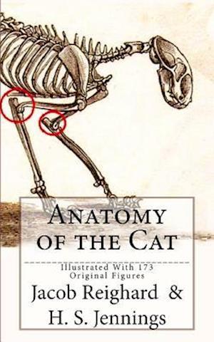 Bog, paperback Anatomy of the Cat af Jacob Reighard