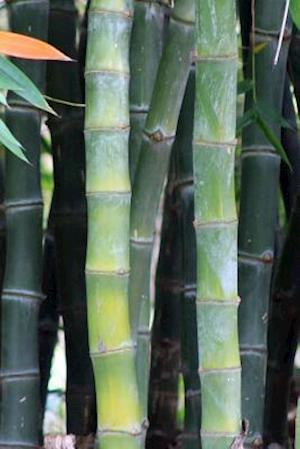Bog, paperback A Bamboo Garden Journal af Cs Creations