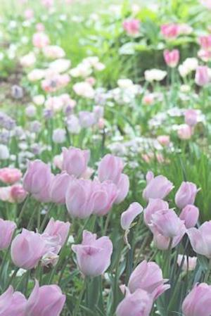 Bog, paperback A Field of Pastel Colored Tulips Flower Journal af Cs Creations