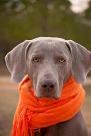 Bog, paperback Weimaraner Dog with an Orange Scarf Journal af Cs Creations