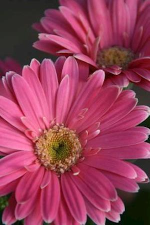Bog, paperback Pink Gerbera Daisy Journal af Cs Creations
