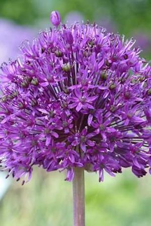 Bog, paperback Purple Ornamental Onion Allium Flower Journal af Cs Creations