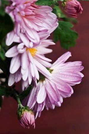 Bog, paperback Lilac Chrysanthemum Flower Journal af Cs Creations