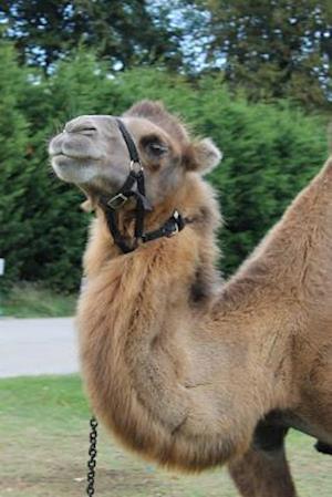Bog, paperback Smug Camel Portrait Journal af Cs Creations