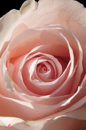 Bog, paperback Close-Up of a Pink Rose Journal af Cs Creations