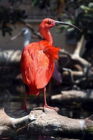 Bog, paperback Lovely Ibis Bird Journal af Cs Creations