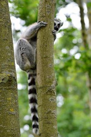 Bog, paperback Ring-Tailed Lemur Playing Peek-A-Boo Journal af Cs Creations