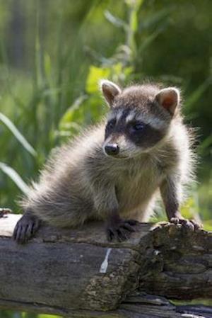 Bog, paperback Baby Raccoon Explores the Wilderness Journal af Cool Image