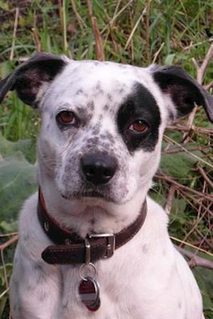 Bog, paperback Darling Mixed Breed Black and White Dog Journal af Cs Creations