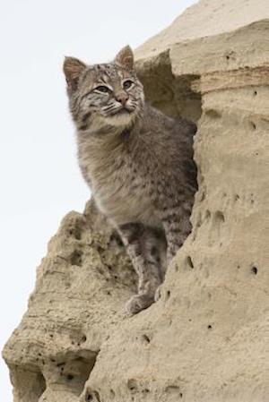 Bog, paperback Bobcat in a Sand Formation Journal af Cool Image