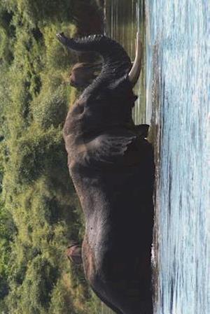 Bog, paperback Bull Elephant in the River Journal af Cool Image