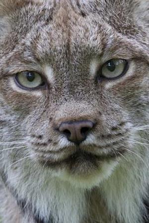 Bog, paperback Canadian Lynx Portrait Journal af Cool Image