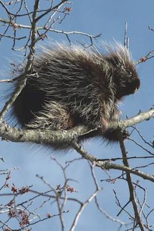 Bog, paperback Porcupine in a Tree Journal af Cool Image
