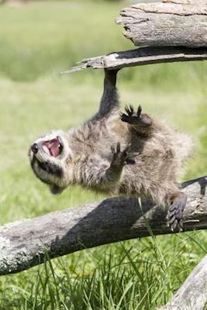 Bog, paperback Raccoon Hanging on a Log Journal af Cool Image