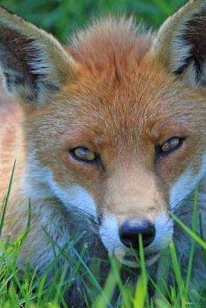 Bog, paperback Red Fox Portrait Journal af Cool Image