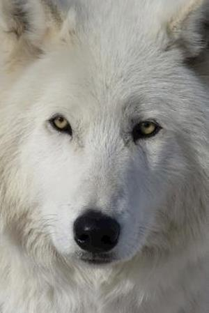 Bog, paperback Say Hello to the Arctic Wolf Journal af Cool Image