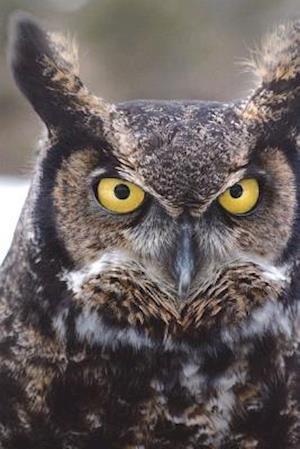 Bog, paperback Say Hello to the Great Horned Owl Journal af Cool Image