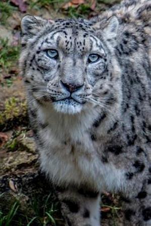 Bog, paperback Say Hello to the Snow Leopard Journal af Cool Image