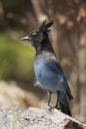Bog, paperback Stellar Jay on a Rock - Bird Journal af Cool Image