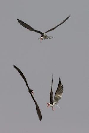Bog, paperback Three Caspian Terns Fighting in the Air Bird Journal af Cool Image