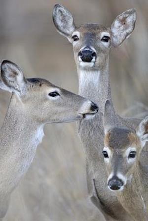 Bog, paperback Whitetail Deer Family - Doe and Fawns Journal af Cool Image