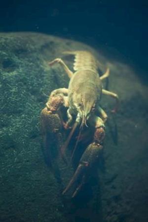 Bog, paperback European Crayfish Journal af Cool Image