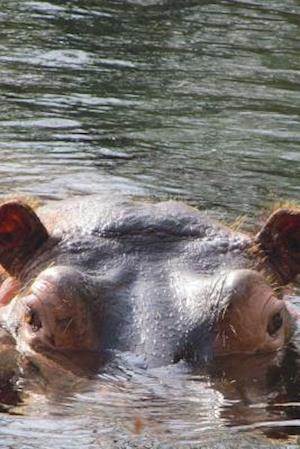 Bog, paperback Hippopotamus in a Pond Journal af Cool Image