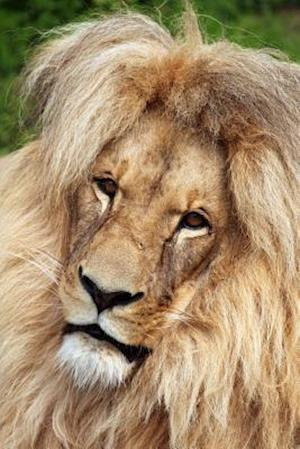 Bog, paperback Katanga Lion Journal af Cool Image