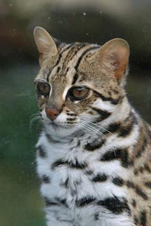 Bog, paperback Leopard Cat Journal af Cool Image