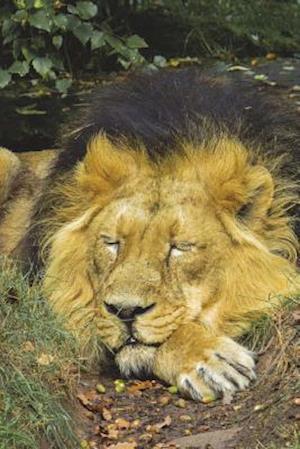 Bog, paperback The Lion Sleeps It Off Journal af Cool Image